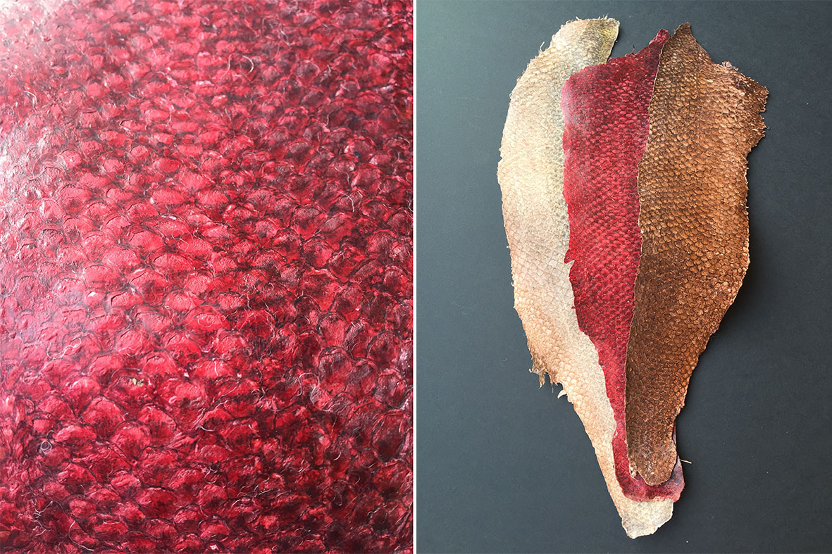 Barsch Fischleder gefärbt