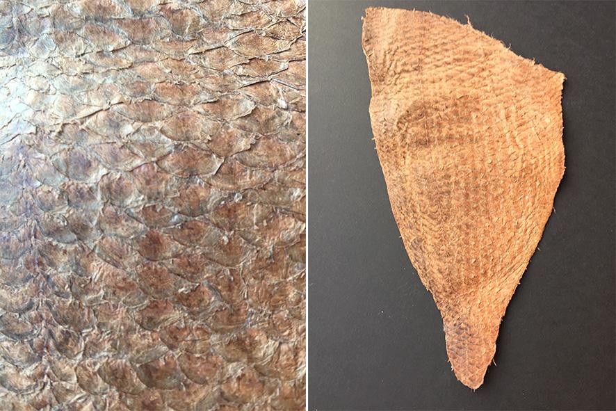 Fischhaut von einer Dorade zu Leder verarbeitet.